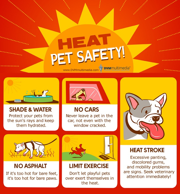 Pet Heat Safety
