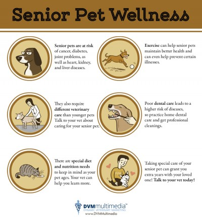 Senior Pet Wellness