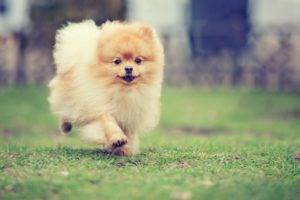 Dog Safety Tips for the Backyard