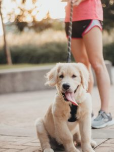 A Happier, Healthier Year For You and Your Pet